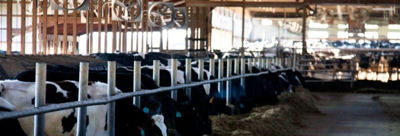 Scenic View Dairy (41)